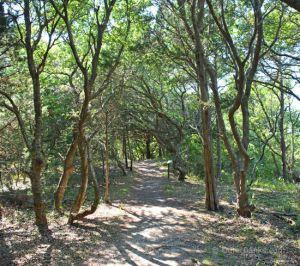 buxton-woods-1
